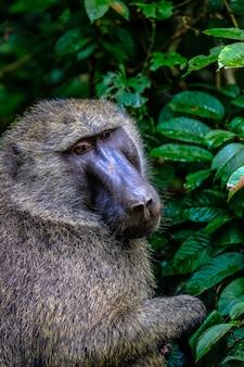 Tiro vertical de babuíno sentado perto de plantas