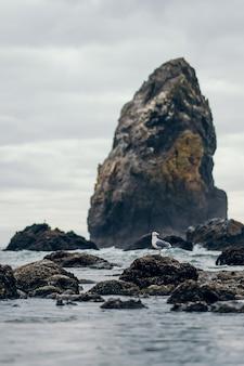 Tiro vertical de belas formações rochosas na água perto da costa