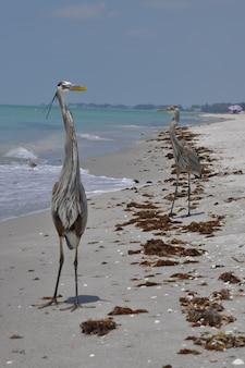 Tiro vertical de duas garças azuis na praia perto das ondas do mar, aproveitando o clima quente