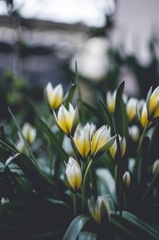 Tiro vertical de flores de pétalas amarelas e brancas com turva