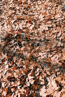 Tiro vertical de folhas de outono amarelas no chão no meio de um parque
