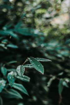 Tiro vertical de folhas verdes com orvalho