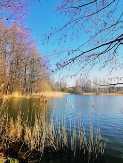 Tiro vertical de junco comum e árvores ao lado de um lago em jelenia góra, polônia.