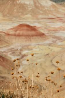 Tiro vertical de lindas flores silvestres em uma área deserta