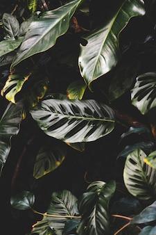Tiro vertical de lindas folhas verdes em uma floresta tropical