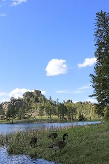 Tiro vertical de patos em pé na grama perto da água com uma montanha à distância