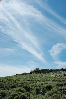 Tiro vertical de pedras em uma colina coberta com grama e plantas sob um céu azul