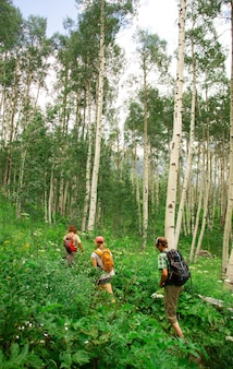 Tiro vertical de pessoas andando em um caminho no meio de uma floresta cercada por plantas