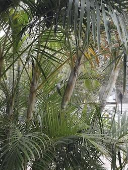 Tiro vertical de plantas de babaçu crescendo em uma área urbana