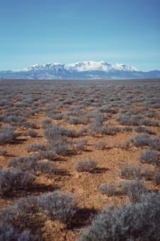 Tiro vertical de um belo campo deserto com vegetação seca e uma colina de neve visível à distância