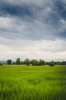Tiro vertical de um belo campo verde com um velho celeiro visível à distância