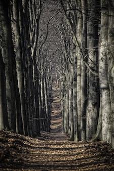 Tiro vertical de um caminho coberto de folhas bonitas cercado por árvores no meio da floresta