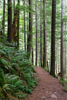 Tiro vertical de um caminho estreito na floresta, rodeado por árvores altas e outras plantas verdes