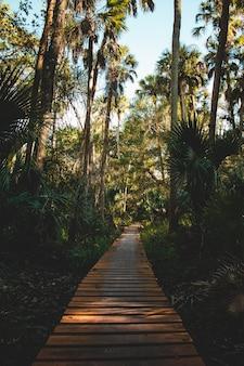 Tiro vertical de um caminho feito de tábuas de madeira, rodeadas de árvores e plantas tropicais