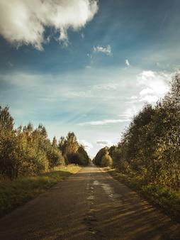 Tiro vertical de um caminho na floresta coberto com as sombras das nuvens no céu ensolarado