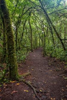 Tiro vertical de um caminho no meio da floresta verde