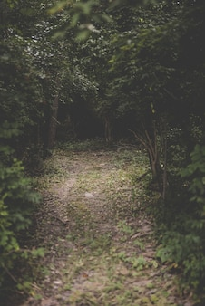 Tiro vertical de um caminho no meio de uma floresta com árvores de folhas verdes
