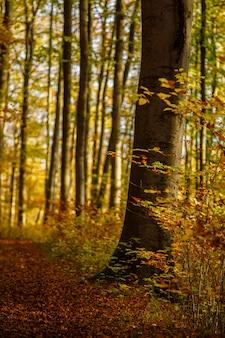 Tiro vertical de um caminho no meio de uma floresta com árvores folhosas marrons e amarelas