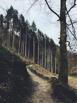 Tiro vertical de um caminho que leva até uma floresta em uma colina