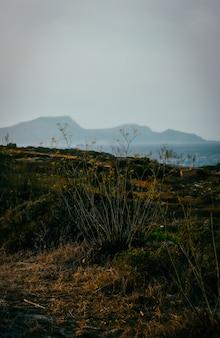 Tiro vertical de um campo gramado com flores e montanhas ao fundo