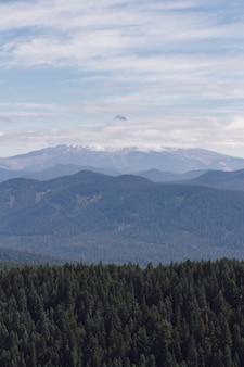 Tiro vertical de um cenário montanhoso nebuloso cheio de árvores da mesma altura