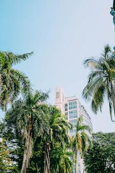 Tiro vertical de um edifício atrás de belas palmeiras altas sob o céu azul
