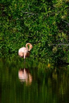 Tiro vertical de um flamingo rosa em pé na água perto das árvores