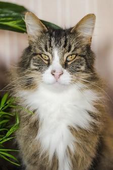 Tiro vertical de um gato marrom de cabelos compridos, olhando para a câmera com um fundo desfocado