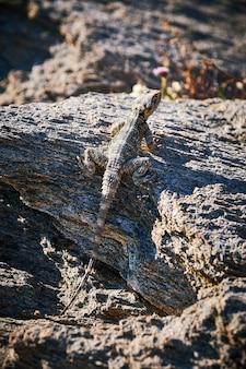 Tiro vertical de um lagarto camuflado em uma pedra texturizada sob a luz do sol