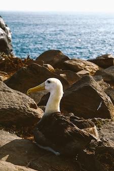 Tiro vertical de um pássaro sentado em uma pedra
