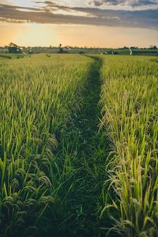 Tiro vertical de um prado ao pôr do sol capturado em canggu bali