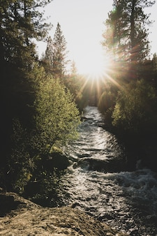 Tiro vertical de um rio fluindo entre árvores durante o pôr do sol