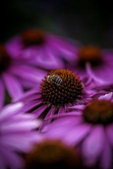 Tiro vertical de uma abelha coletando néctar em uma flor de pétalas roxas em um fundo desfocado