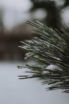 Tiro vertical de uma árvore com neve com turva