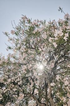 Tiro vertical de uma árvore de flor rosa com o sol brilhando através dos ramos