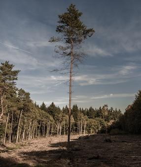 Tiro vertical de uma árvore solitária com galhos cortados, crescendo na floresta em um dia sombrio