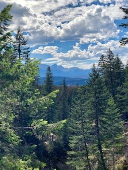 Tiro vertical de uma bela floresta com muitos pinheiros sob o céu nublado