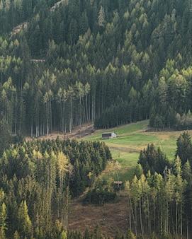 Tiro vertical de uma casa de campo em uma colina, rodeada por belas árvores altas
