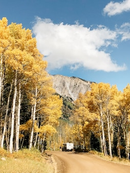 Tiro vertical de uma estrada de terra no meio de árvores folhosas amarelas sob um céu nublado durante o dia