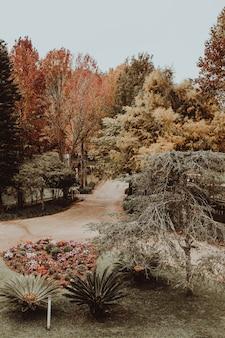 Tiro vertical de uma estrada em um parque cheio de árvores durante o outono