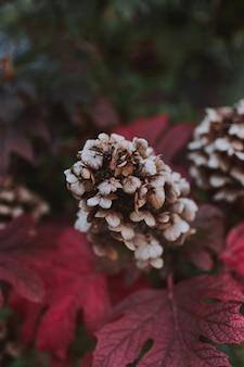 Tiro vertical de uma flor roxa de grifola frondosa cercada por folhas roxas em uma floresta