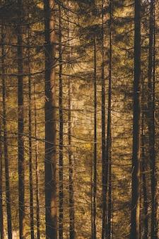 Tiro vertical de uma floresta cheia de belas árvores altas