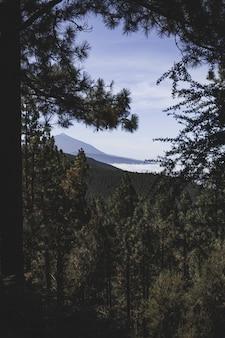 Tiro vertical de uma floresta cheia de diferentes tipos de plantas, rodeadas por um cenário montanhoso