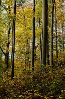 Tiro vertical de uma floresta com árvores folhosas amarelas e verdes