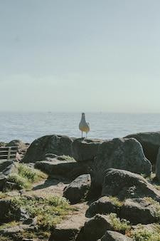 Tiro vertical de uma gaivota em pé sobre uma rocha, olhando para a câmera