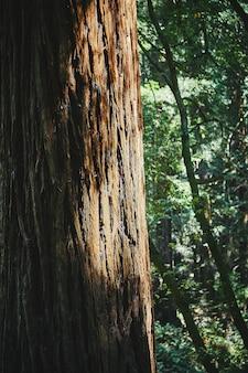 Tiro vertical de uma grande árvore no meio de uma bela floresta