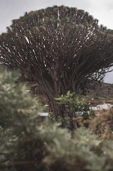 Tiro vertical de uma grande árvore velha em uma vila cercada por colinas