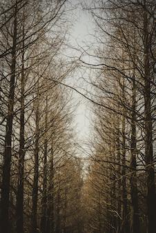 Tiro vertical de uma linha de árvores sem folhas marrons.