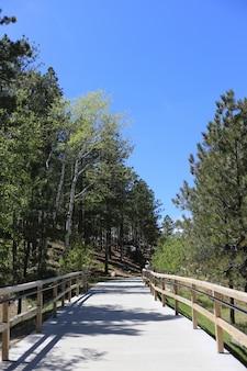 Tiro vertical de uma passarela com cerca de madeira no meio da floresta
