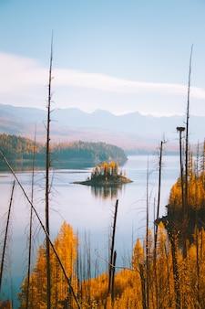 Tiro vertical de uma pequena ilha com árvores de folhas amarelas no meio da água